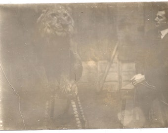 Life with the Lions circus trainer animal photo vintage lion