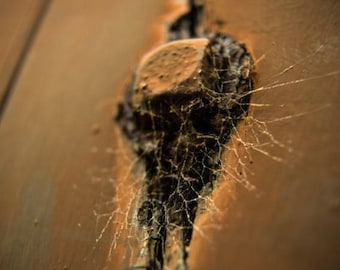It Only Takes a Moment, rusty spider web art photography from South Carolina Art Photography by Sarah McTernen