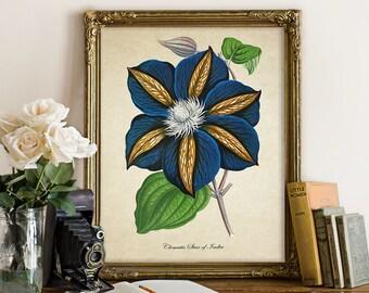 Blue Clematis Botanical Print, Flower Print, Blue Floral Giclee, Vintage Home Decor, Flower Botanical Art, Decorative Art Reproduction FL122