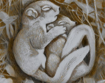 Baby Squirrels, Nature, Spooning, Affection, Original Drawing, Archival Print, Home Decor, Wall Decor