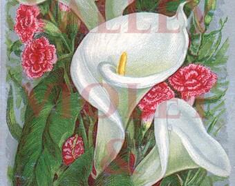 Victorian Calla Lilies DIGITAL DOWNLOAD