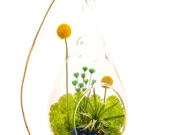 Air Plant Terrarium with Moss, Flowers, Rocks, Green Amethyst / Wonky Wonderland