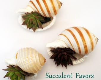 1 Succulent Shells Wedding, Baby Shower , Favors,  Sample