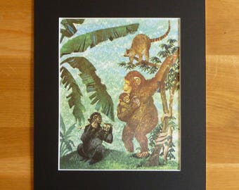 Original 1960's print illustration of monkeys / apes in the jungle including mount