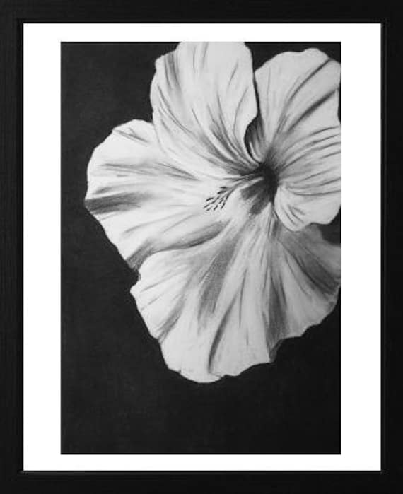 Original charcoal drawing black and white flower