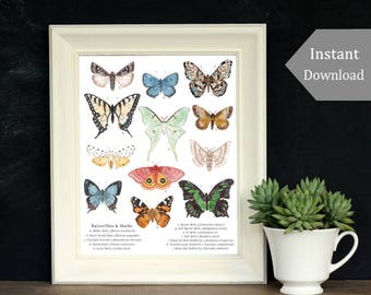 Educational Print - Printable Art - A4 and 8 x 10 - Butterflies and Moths, Montessori, Science, Insects, Nature Study, Entomology