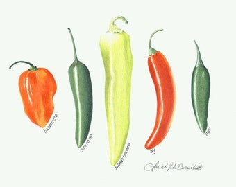 "Garden fresh peppers, vegetables, print of original 8"" x 10"", standard size. photo realistic, art, illustration, archival white coverstock,"
