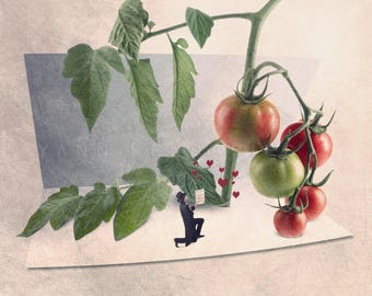kitchen decor, tomato print, gardener gift, food photography, gifts for gardeners, funny kitchen art, kitchen art print, kitchen wall decor