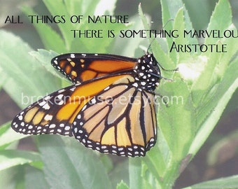 Close up of monarch butterfly - Fine Art Photography ACEO - Marvelous Nature
