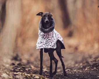 Italian greyhound coat made of high quality windproof softshell