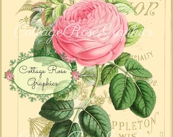 Pink Rose digital download Stinson Vintage typography ephemera single image ECS buy 3 get one free