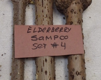 """SET #4 - Three (3pc) Very THICK (one inch) live unrooted plant cuttings of Elderberry """"Sampo"""", sent in box wrapped in moist"""
