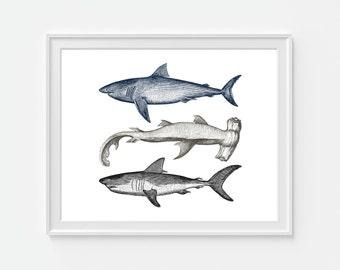Shark Art Print, Nautical Decor, Beach Decor, Sea Life, 5x7, 8X10, 11x14 Nautical Wall Art, Fish Wall Art, Coastal Art, Shark Decor