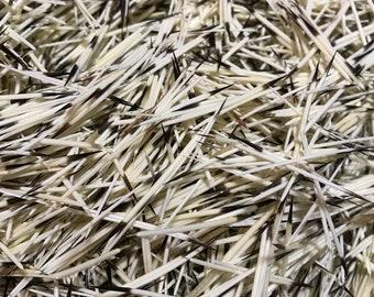 200 Porcupine Quills