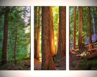 Nature Triptych, Fine Wall Art, Woods near Mt. Hood, Oregon, in green, yellow, and brown - Wooden Warmth