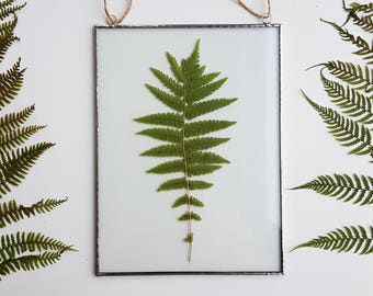 Pressed fern Frame, Pressed plants suspended between glass, Double Sided Glass Frame, Gift for nature lovers