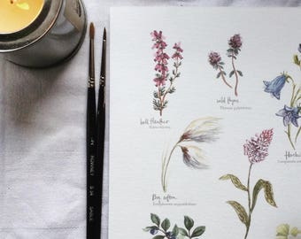 Flora of The Mourne Mountains Print