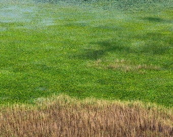 Reed   Lake   Water   Blue Green Brown   Shore   Fine Art Photography   Photo   polychromatophil   Portrait