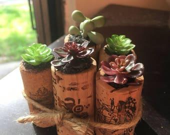 Wine Cork Succulent Garden