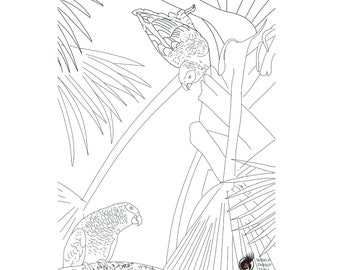 Coloring page. African Grey Parrots.