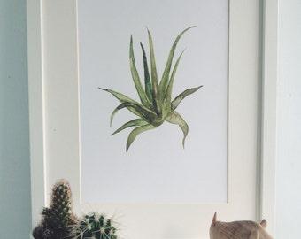 Aloe Plant A4 Illustration Print
