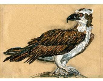 5 x 7 drucken Osprey - Vogel Kunst Mischtechnik zeichnen