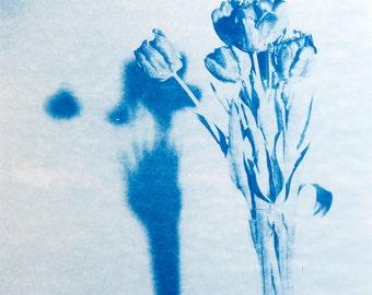 Blauwdruk oftewel cyanotype tulp met schaduw.