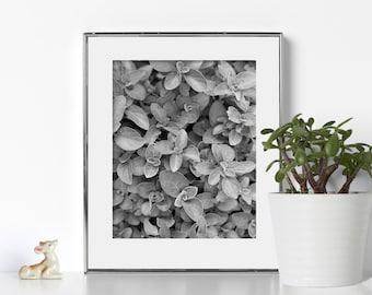 Black and White Noir Digital Download Printable Art Soothing Art Relaxing Design Geometric Natural Design Feminist Flower Photography Cali