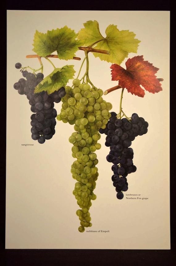 Grapes Wall Decor Art Kitchen Decor Grapevine Decor Grape