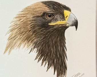 Head, Eagle, Imperial, Iberian, birds, raptors, Iberian, falconry, portrait, predatory