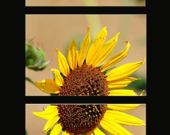 """Lustre Yellow Sunflower with Bee (3) 8"""" x 12"""" Piece Photograph Set Home or Office Wall Decor"""