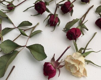 Dried Miniature Rosebuds, Dried Flowers, Real Roses, Resin Jewelry, Craft Supply, Table Decor, Wedding Flowers, Centerpieces, Pink, Red