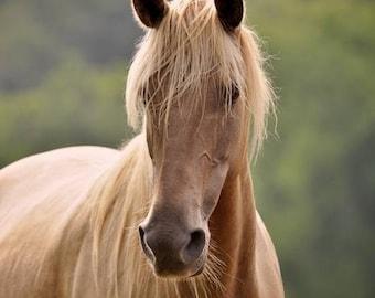 Horses, Horse Photos, Rockies, Equine Art, Fine Art, Equine Photography, Summer Mare