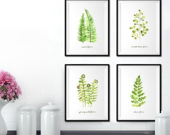 Fern watercolor painting, Botanical print, Garden print, Fern print, Set of 4, Botanical art, Living room decor, Spring art, Green leaf art