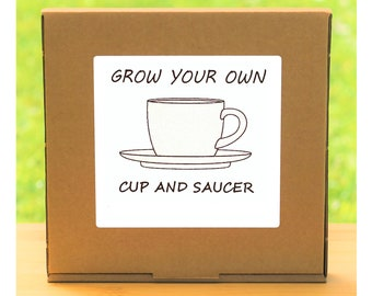 Unusual Windowsill Gardening Gift - Grow Your Own Cup and Saucer Plant Kit