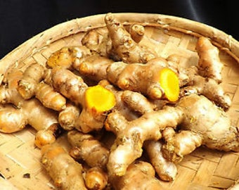 Rare 150gr root turmeric the island of Reunion exotic food costs