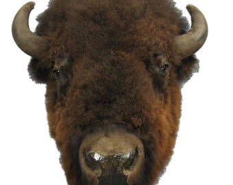 Buffalo Head Mount (20-10-XL-G05EW)