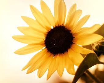 Nature Fine Art Photography Print, Sun Flower Wall Art, Country Home Decor- Morning Sun