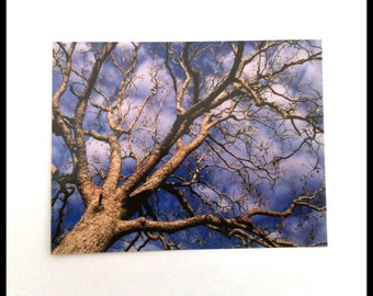Tree Photograph Postcard