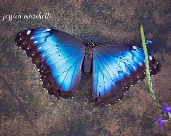 nursery art, butterfly photography, butterfly art, nature photography, butterfly print, nursery decor, butterfly decor, blue home decor