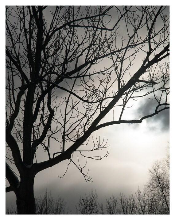 Autumn decor, Fall, Photography, Fine art print, foggy landscape, 5x7, 8x10, grey with sunlight