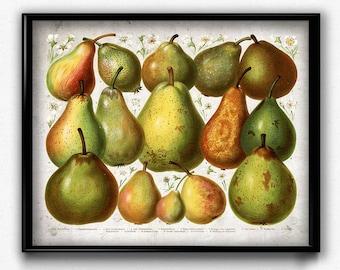 Pears Vintage Print - Pear Poster - Pear Art - Pear Picture - Fruit Poster - Fruit Art - Fruit Picture - Kitchen Decor - Kitchen Art