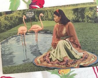 Vintage Florida postcard Silver Springs Ross Allen Reptile Institute flamingos Seminole woman souvenir linen 1940s