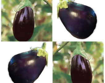 BLACK BEAUTY Eggplant seeds - High Yielding Glossy Ovals - attractive With Great Flavor - 80 Days