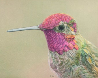Anna's Hummingbird Print 8 x 10 inch of watercolor painting 8 by 10