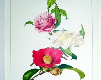 Vintage Botanical Flower Print Camellia, 1984 Illustrated by Marilena Pistoia, Original Floral Print Magazine Page, Red Camellia, Wall Art