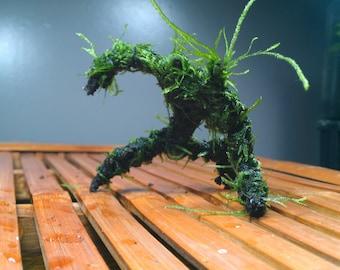 Aquarium decoration Mini Mossman for shrimp and betta tanks