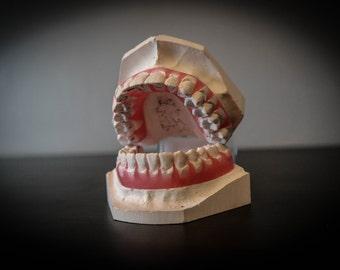Dental Specimen
