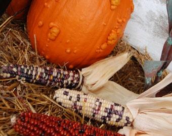Indian corn and pumpkin