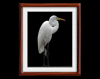 Great Egret Print - 8x10 or 11x14 Great Egret Photograph - Bird Photograph - Bird Print - Egret Art (P13)